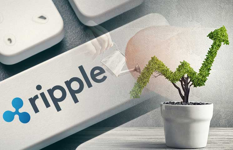 Ripple's Daily Ledger Transaction Volume Of XRP Overshadows Its Total Trading Volume